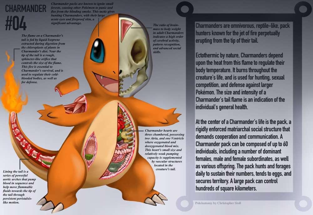 Charmander Anatomia