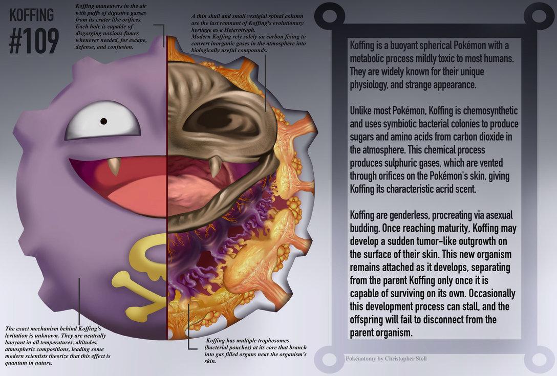 Pokémon Anatomía